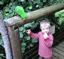 Kids entertainment-#Birds of paradise