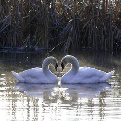 Love on water.  Photo by Stefan Behrens