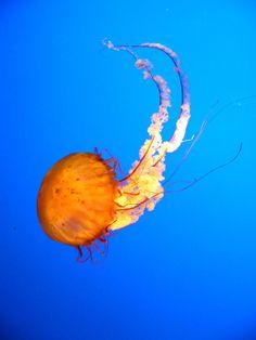 Love Jellyfish.