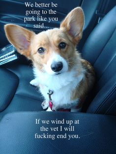 way too funny.  I am sure all dogs think that when they get in the car