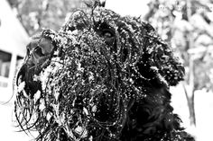 Amazing photo of Lincoln (black russian terrier)