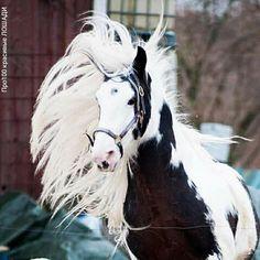 Девушка И Лошадь, Любовь Лошадей, Смешные Фотографии Животных, Смешные Животные, Цыганская Лошадь, Лошади Аппалуза, Клейдесдаль, Лошади, Живописные Пейзажи