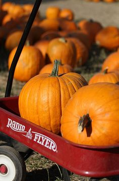 Can't wait to go to the Pumpkin patch with my hubby, son, and father in law:) my son was just preemie newborn last year so we didn't get to go:( can't wait for the memories this year!!!