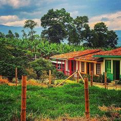Brightly painted housing contrasts with the lush green of this Colombian coffee plantation. Beautiful share from @dannyt2984. #GadvColombia Hotels-live.com via https://instagram.com/p/6z0IxCiqsP/