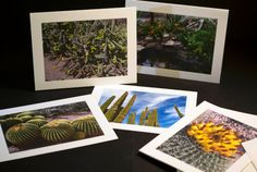 Check out this item in my Etsy shop https://www.etsy.com/listing/219624196/note-cards-with-photos-of-desert