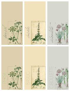 étiquettes plantes aromatiques