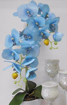 Indoor Orchids, Artificial Orchids, Orchids Garden, Blue Plants, Orchid Plants, Home Flowers, Flowers Nature, Orchid Flower Arrangements, Orquideas Cymbidium