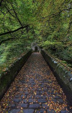 """bonitavista: """" Scotland photo via forest """""""