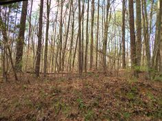 Soddy Daisy – Three 5+/- acre lots for sale on Armstrong Road near the lake. $79,900 Each. The Paula McDaniel Group Cell: 423-667-2997 * Office: 423-362-8333  Real Estate Partners Chattanooga, LLC. Equal Housing Opportunity. Licensed in TN and GA.