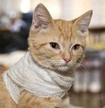 How To Pack An Emergency Kit For Cats By Dr. Jennifer Coates, Dvm – How To Pack An Emergency Kit For Cats. How Prepared Are You To Take Care Of Your Cat In Case Of A Disaster? Dr. Coates Put Together A List Of Things We Must Have For An Emergency.