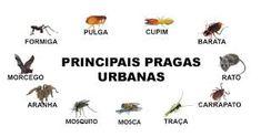 Principais Pragas Urbanas Movie Posters, Pest Control, Manaus, Insects, Animals, Fleas, Film Poster, Film Posters
