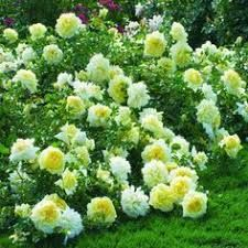 Tagged - The social network for meeting new people Coming Up Roses, Meeting New People, House Painting, Beautiful Gardens, Spring Time, Flora, Nature, Plants, Outdoor