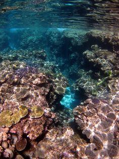 Snorkelling in Vava'u, Tonga