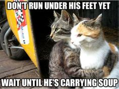 Funny Animal Pictures With Captions-This is all Jamaica (Jamakamecrazy) Kitty.