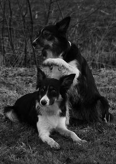 the holy sign: Border Collie Milka and her daughter Diesel