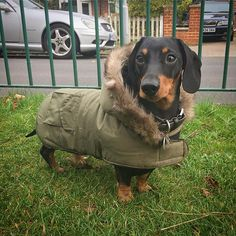 No more shivering in the wet grass for me!! #dogfashion
