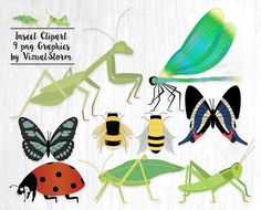 Insect Clipart Graphics. #insects #insectclipart #bugclipart #ladybugclipart #dragonflyclipart #butterflyclipart #beeclipart #grasshopperclipart #katydidclipart #insectillustration #insectgraphics