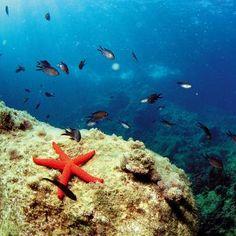La Reserva Natural del Cabo de San Antonio es un espacio protegido de alto valor ecológico que ocupa 900 hectáreas. En sus fondos marinos se hallan especies tales como corales, praderas de posidonia oceánica, etc. En cuanto a fauna marina: cigalas, meros, gorgonias... E incluso delfines y cetáceos como el rorcual común.  En su espacio se permite el baño y buceo en apnea, la navegación de embarcaciones sin motor y la navegación a velocidad moderada así como el amarre en las boyas disponibles.