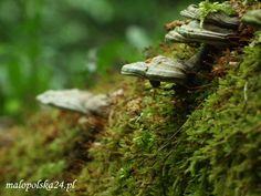 Czy Natura 2000 naraża lokalne społeczności i gospodarki na straty i koszty? Czy wszystkie ewentualne korzyści są związane z tylko i wyłączenie z strefą przyrodniczą? Czy podstawowe cele programu Natura 2000 zostały zrealizowane?  http://www.malopolska24.pl/index.php/2012/05/natura2000-naturalne-korzysci/