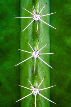 Thomas Freund, »Mein kleiner grüner Kaktus....«, Lobende Erwähnung, 1 Punkt, Thema: Pflanzen – Kategorie: In Park und Garten