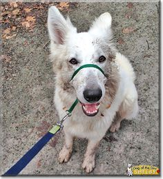 Read Shelby's story the German Shepherd from Pittsburgh, Pennsylvania and see his photos at Dog of the Day http://DogoftheDay.com/archive/2014/January/27.html .