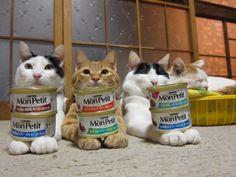 モンプチ 動画 - かご猫 Blog