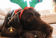 """Shamontiel wrote """"Christmas inspiration from the dog ~ 'Raise the Woof' and other pup entertainment"""" #pets #dogs #dogmom #dogdad #dogowner #ChristmasMemories #ChristmasDecor #christmasdecorations (Photo credit: Adriana Puente/Unsplash)"""
