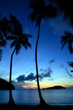 Palm trees silhouetted by a stunning Caribbean sunset... a lasting memory at The Ritz-Carlton, St. Thomas.