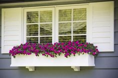 House shutters, gardening for beginners, planter boxes, flower boxes, windo Window Box Plants, Window Box Flowers, Window Planters, Window Boxes, Fake Flowers, Planter Boxes, Pretty Flowers, Patio Interior, Interior Exterior