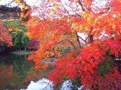 鎌倉/鶴岡八幡宮 Kamakura / Tsuruoka- Hachimangū