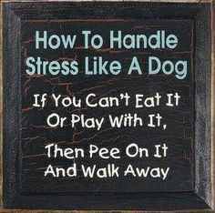 Funny quote about stress. For more hilarious quotes on life visit Great Quotes, Quotes To Live By, Inspirational Quotes, Quirky Quotes, Clever Quotes, Awesome Quotes, Motivational Quotes, The Words, Dog Quotes