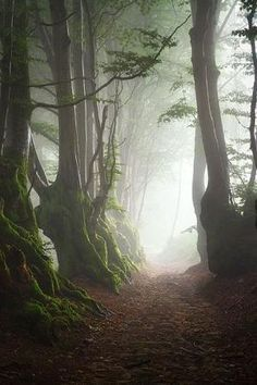 a walk in the woods in the fog...