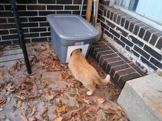 Feral cats : Learn How to Make the Cheapest and Easiest Cat Shelter for Winter (PHOTOS) Ferral Cat Shelter, Animal Shelter, Feral Cat House, Feral Cats, Tnr Cats, Cat Shelters For Winter, Outside Cat House, Outside Cat Shelter, Niche Chat