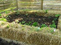 Conditioning Straw Bales for Gardening - Bing images …