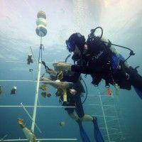 Reef Crawl the Florida Keys: Conserve, Preserve, Protect, and Grow Vip Card, Kayak Paddle, Florida Keys, Snorkeling, Preserve, Conservation, Kayaking, Key Largo, Conservation Movement