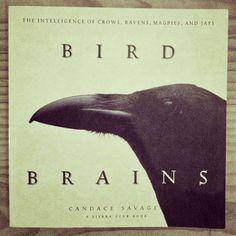 Some animals are more equal than others. #ravens #birds #corvus #ravneringene