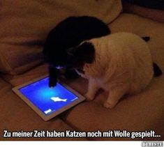 Zu meiner Zeit haben Katzen noch mit Wolle gespielt... | Lustige Bilder, Sprüche, Witze, echt lustig
