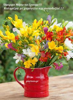 Types Of Flowers, Yellow Flowers, Spring Flowers, Beautiful Flowers, Fresia Flower, Flower Vases, Growing Flowers, Planting Flowers, Potted Flowers