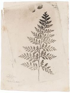 bracken fern illustration tattoo - Google Search