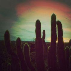 desert silhouettes