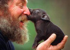 black miniature pig and man