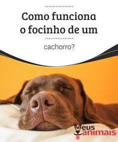 Como funciona o focinho de um cachorro?   Você tem curiosidade em saber como funciona o #focinho de um #cachorro? Saiba mais sobre ele e o maravilhoso #olfato dos cães neste artigo. #Curiosidades