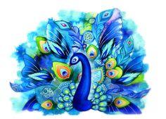 peacock - Buscar con Google
