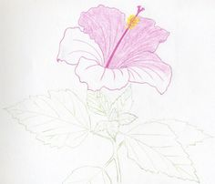 There are so many kinds of hibiscus flowers that I could not decide which one to draw for you at first. To choose red or yellow or white…? Cute Drawings Of Love, Weird Drawings, Colorful Drawings, Easy Drawings, Flower Drawing Tutorials, Flower Sketches, Art Sketches, Tulips Flowers, Hibiscus Flowers