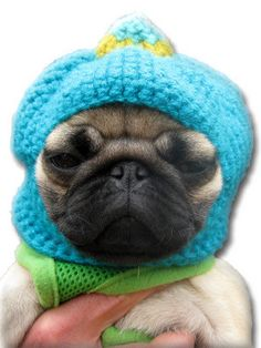 Custom Dog Hat  Made to Order  Barkclava Dog Hats  You by pugnotes, $18.00