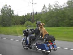 doesn't look very safe for this pup