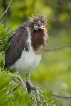 Florida Wildlife - Copyright © Wil Hershberger 2003