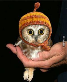 So I heard some of you guys like owls...
