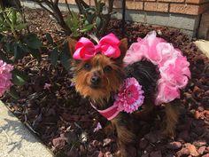 It's hard to resist dressing up your pets Dog Halloween Costumes, Dog Costumes, Halloween Treats, Funny Dog Images, Funny Dogs, Dog Photo Contest, Dog Recipes, Dog Photos, Dog Treats
