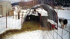 goat housing -